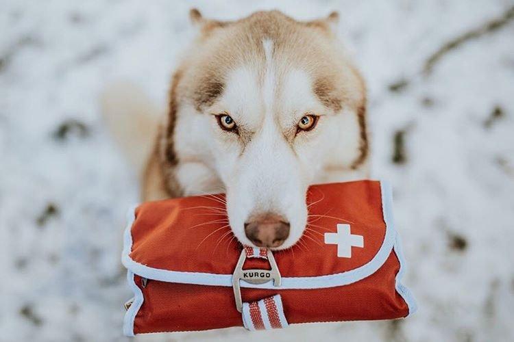 Tudo sobre a raça Husky Siberiano