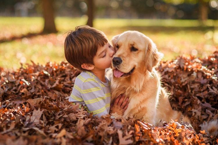 Golden Retriever com criança
