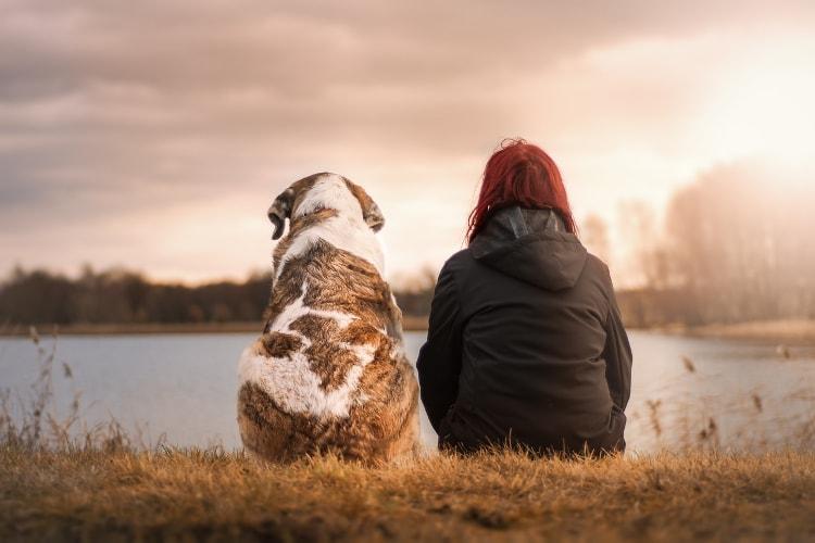 Cachorro e mulher sentados na grama