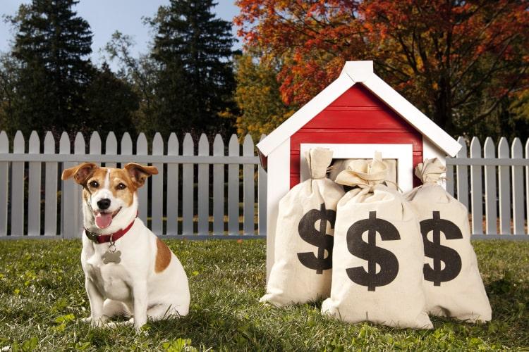 Cachorro sentado na grama e sacos de dinheiro