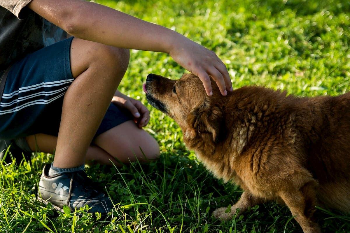 Homem fazendo carinho em cachorro carente