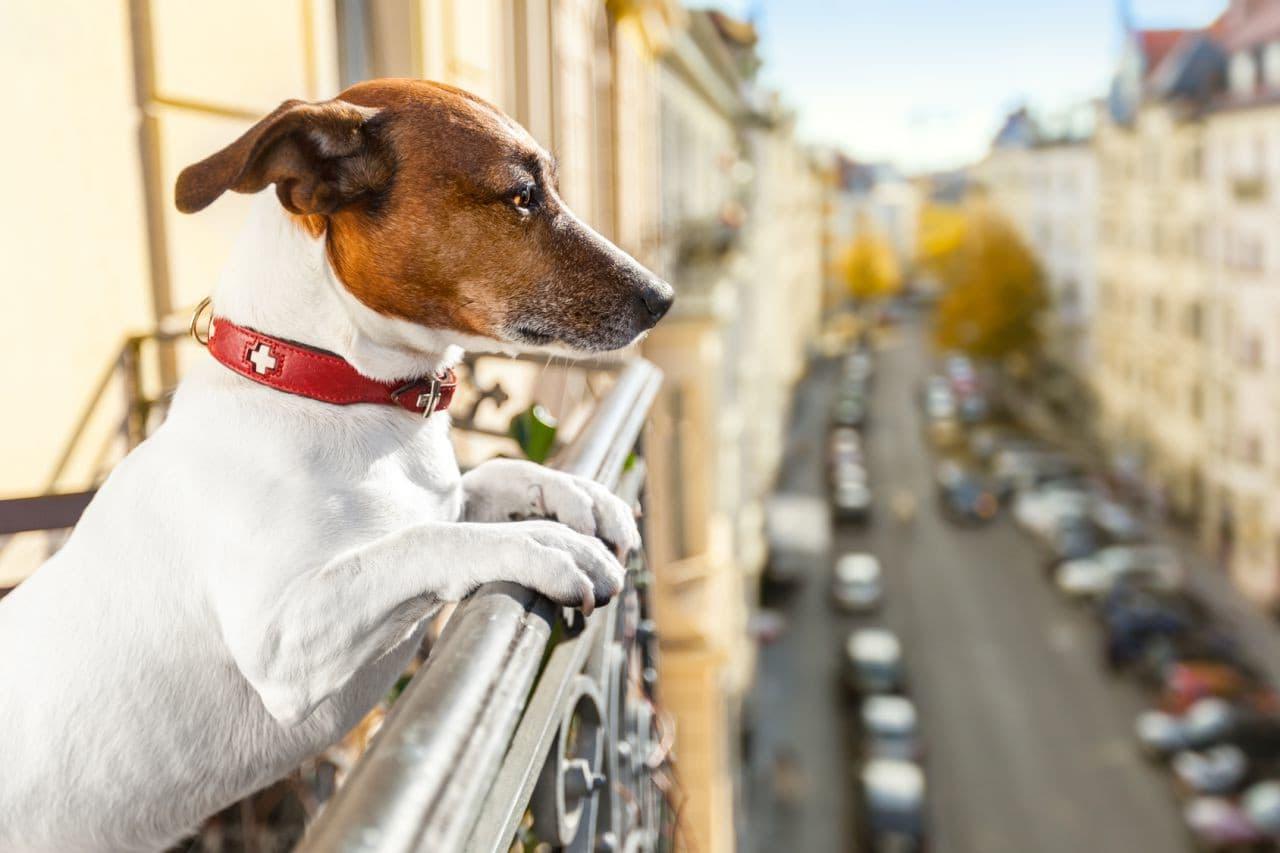 Cachorro na varanda de um apartamento