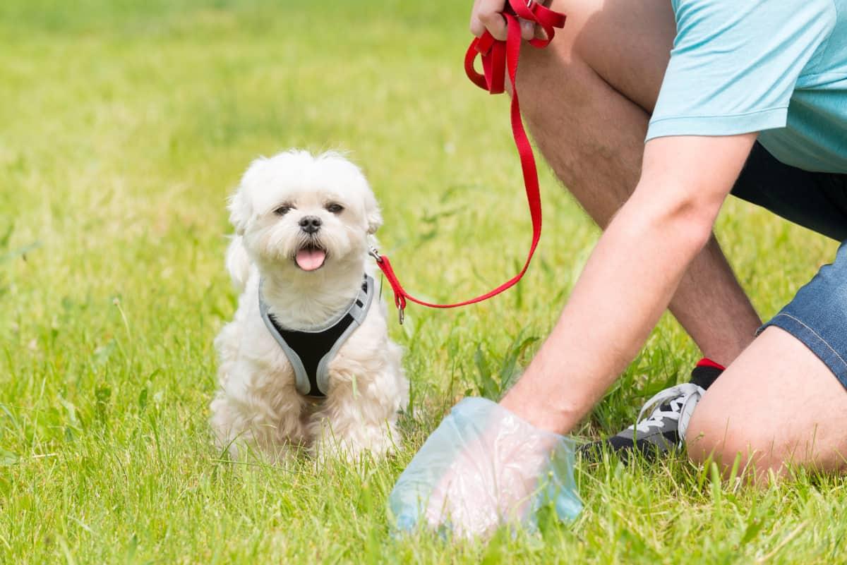 Homem limpando cocô de cachorro com sacola plástica
