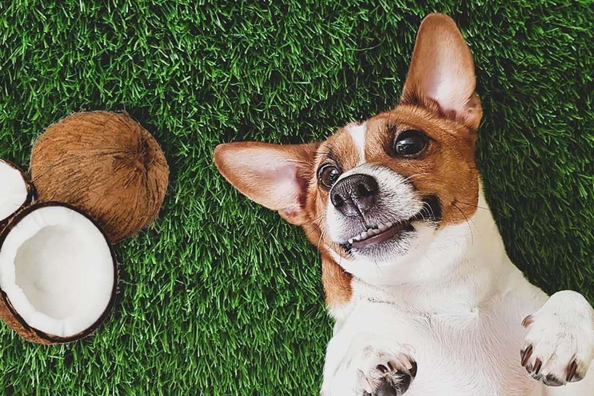 Cachorro com um coco