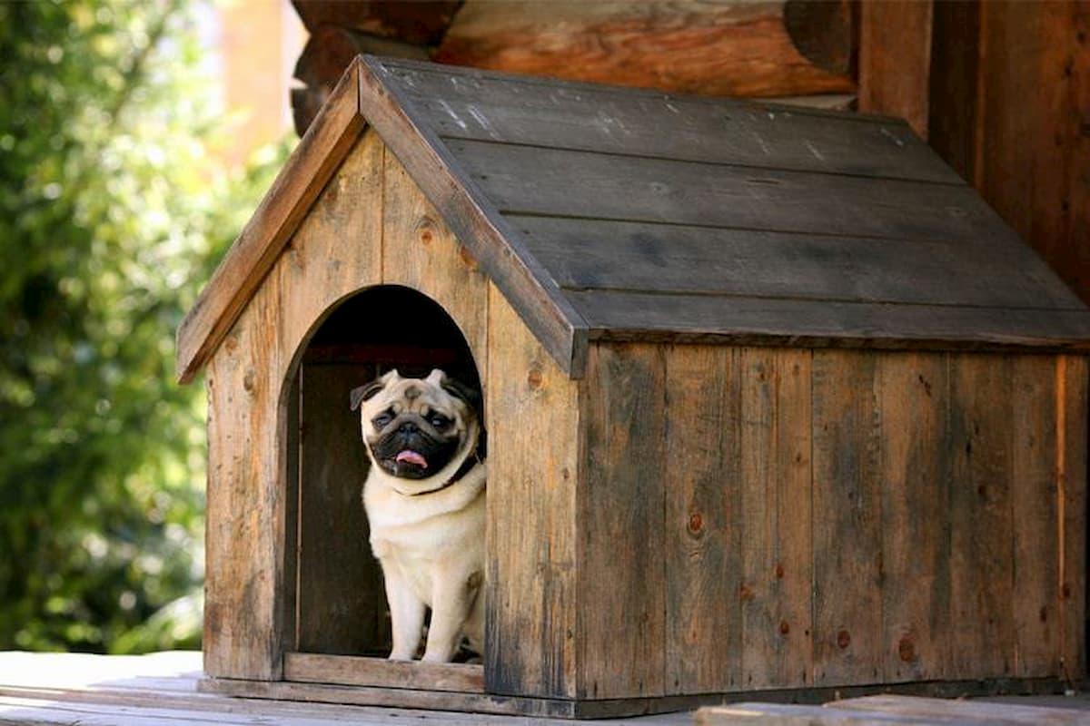 pug dentro da sua casinha de madeira