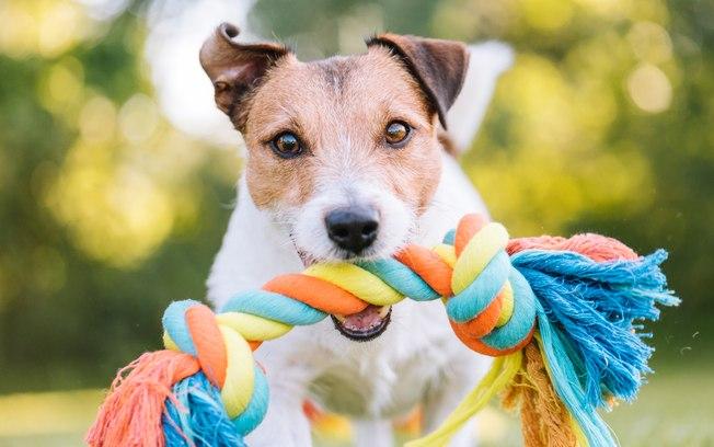 Cachorro com brinquedo de corda