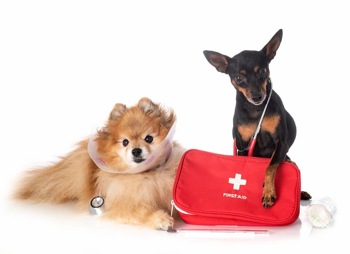dois cães com kit de primeiros socorros