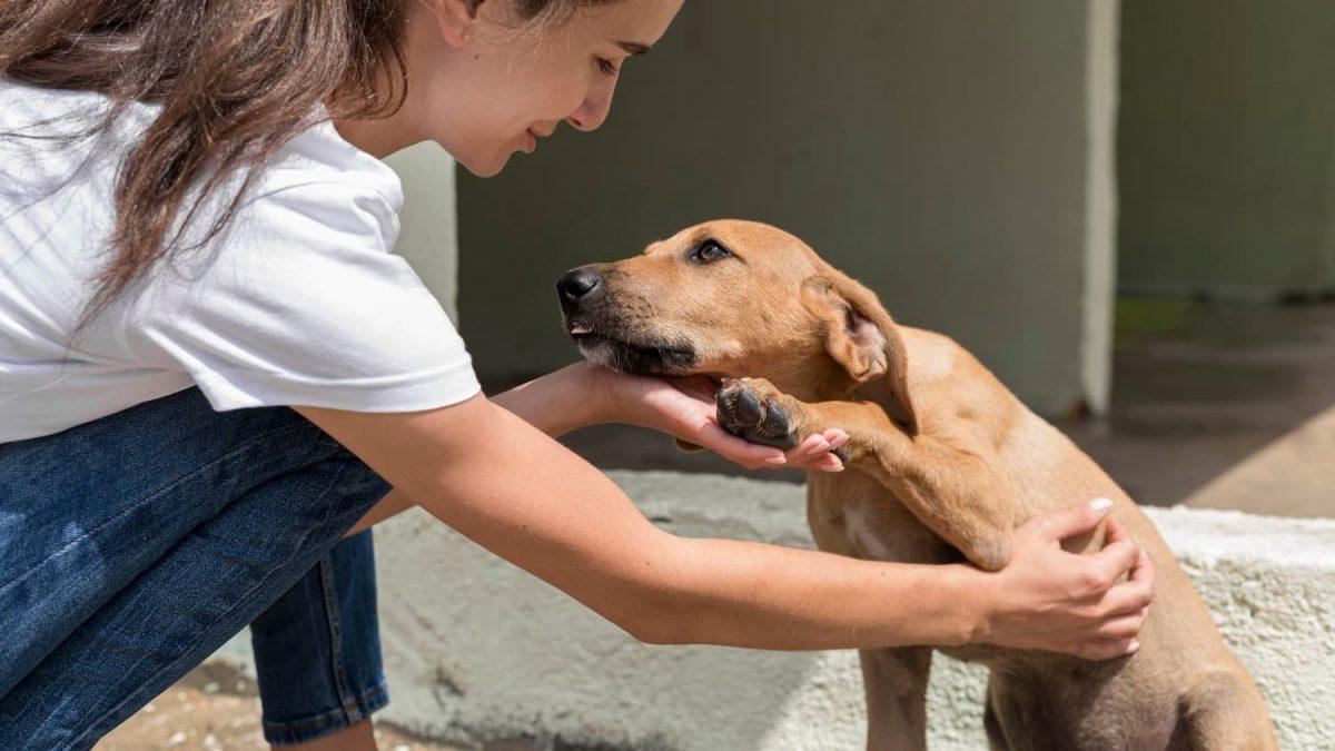 cachorro caramelo recebendo carinho na barriga
