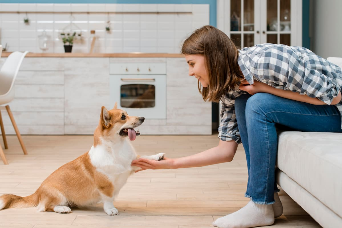cachorro adestrado dando a pata