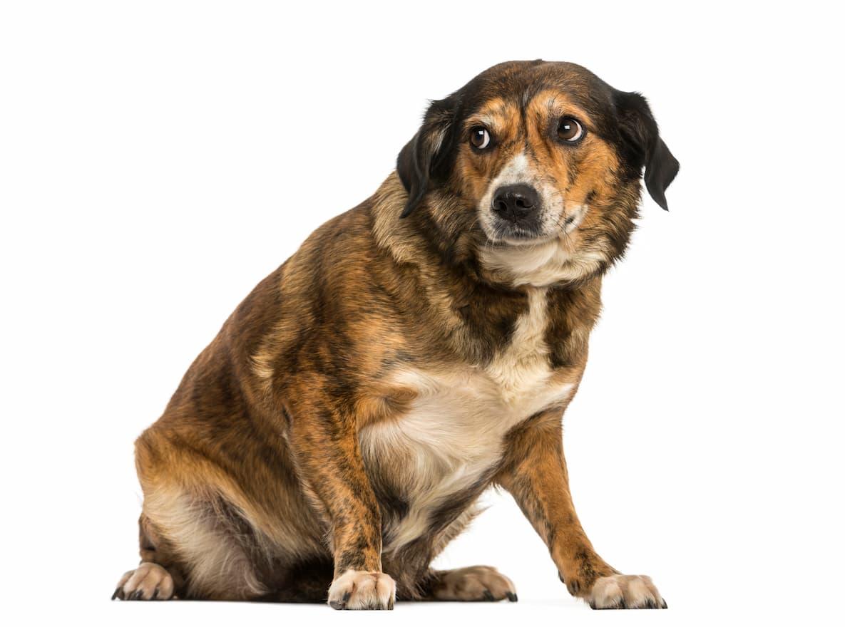 cachorro com olhar desconfiado
