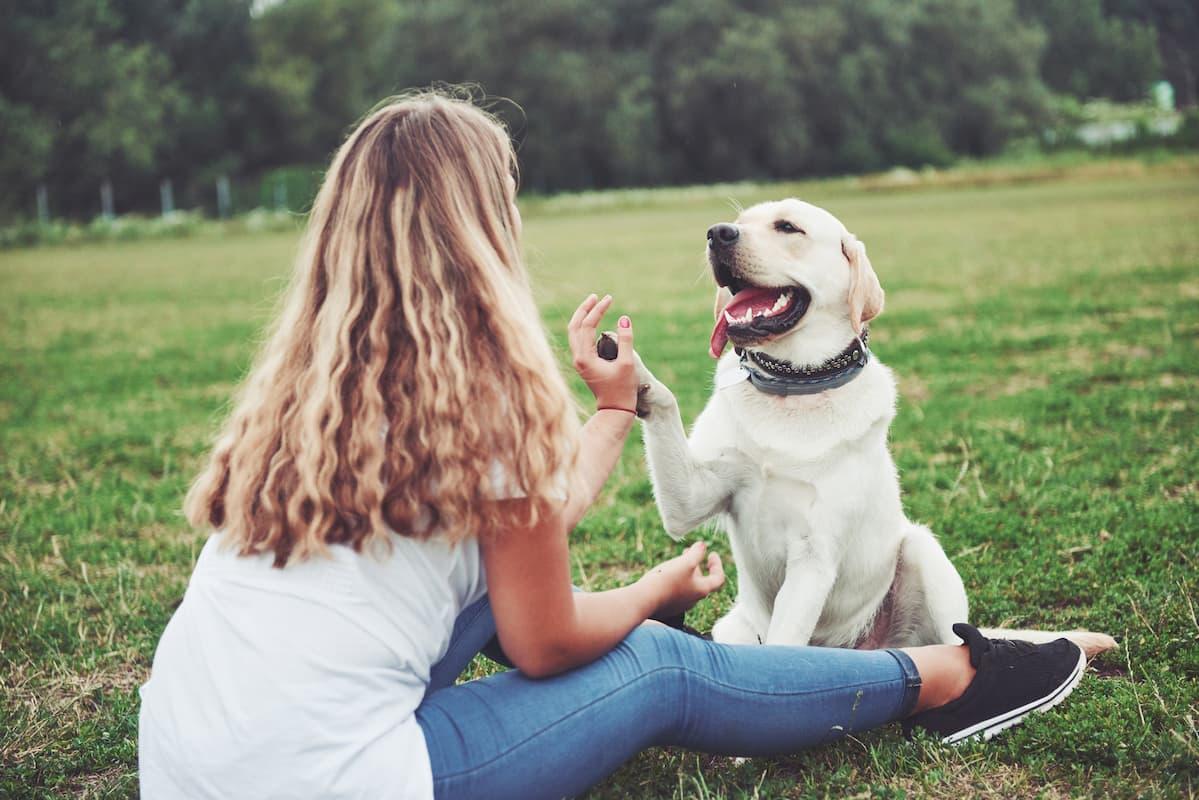 labrador brincando na grama com tutora