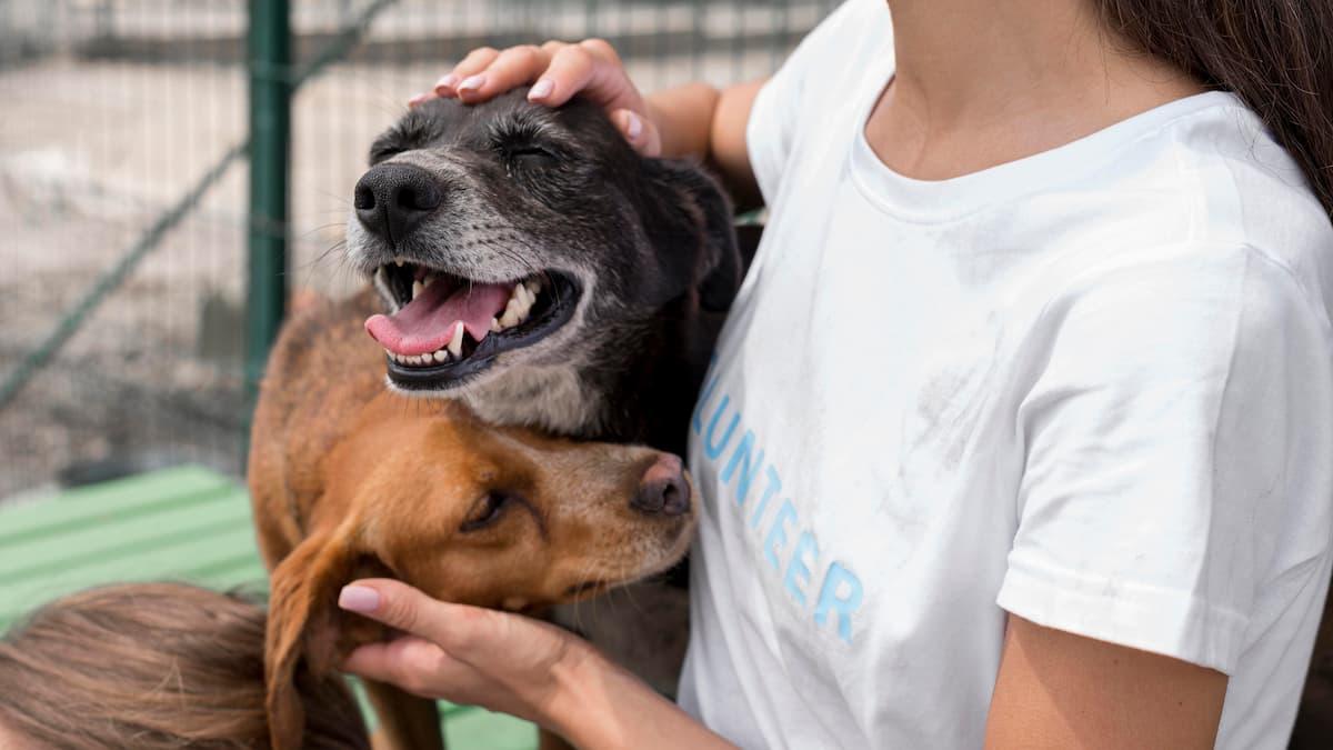 mulher brincando com cães de abrigo