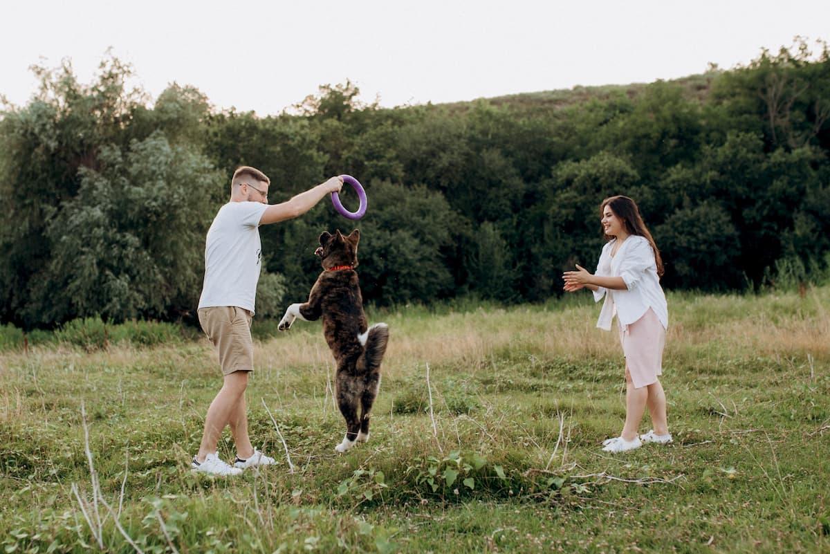 cachorro brincando de frisbee com tutpores